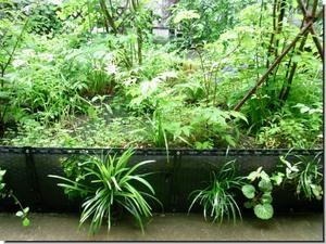 Center_garden_0876