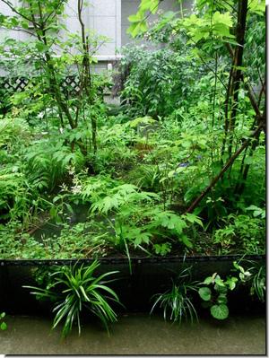 Center_garden_0878